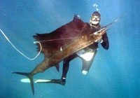 Spearfishing - Scottburgh